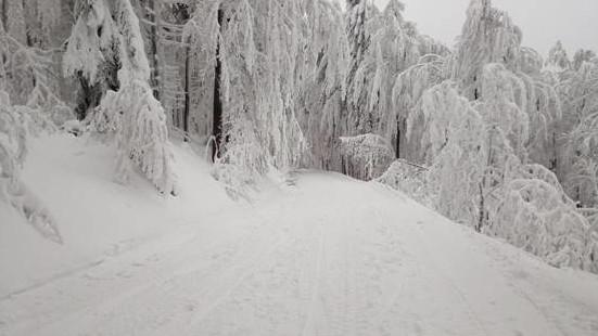 Horská služba Beskydy varuje před pohybem v lese, hrozí pád větví a stromů