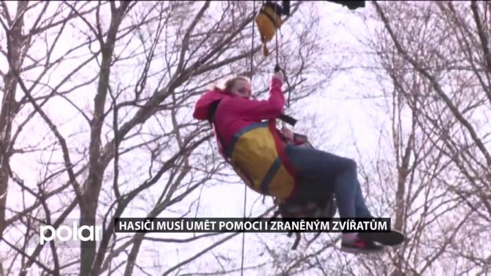 Psí figurant Kijvu, i díky němu hasiči umí zachraňovat zvířata