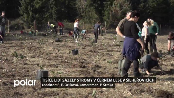 Tisíce dobrovolníků sázely stromy v Šilheřovicích, povedlo se obnovit 3,5 hektaru lesa