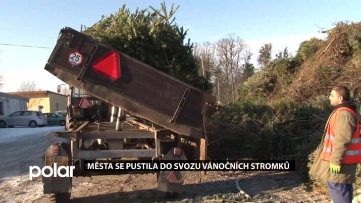 Většina vánočních stromů se vrátí do přírody v podobě hnojiva