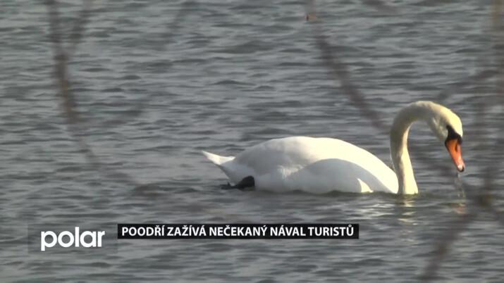 Hnízdění ptáků mohou ohrozit neukáznění návštěvníci CHKO Poodří