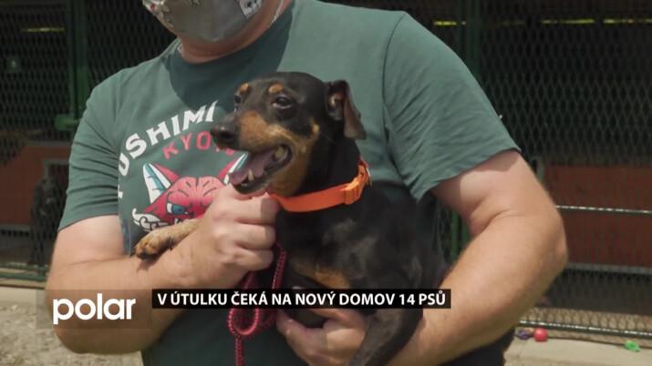 V karvinském útulku čeká na nový domov 14 psů, vybrat si můžete přes internet